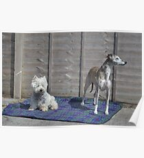 Meme and Me(Gracie Whippet) Poster