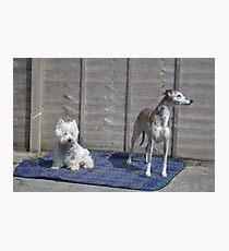 Meme and Me(Gracie Whippet) Photographic Print