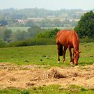 The Horse by Lewis Kesterton Photography