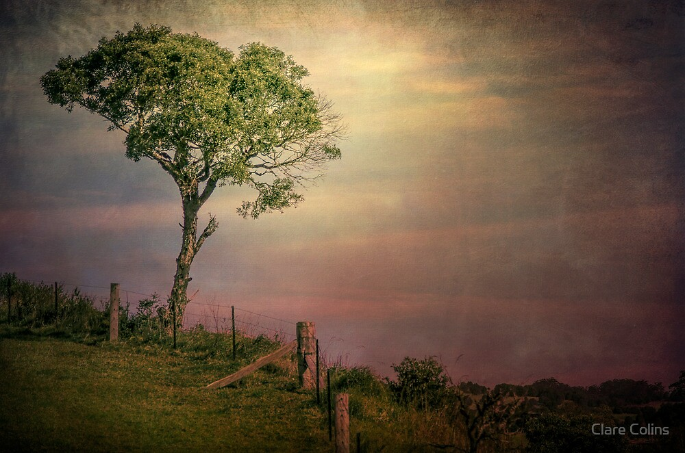light on a single tree by Clare Colins