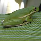 Designer Tree Frog by Lexi