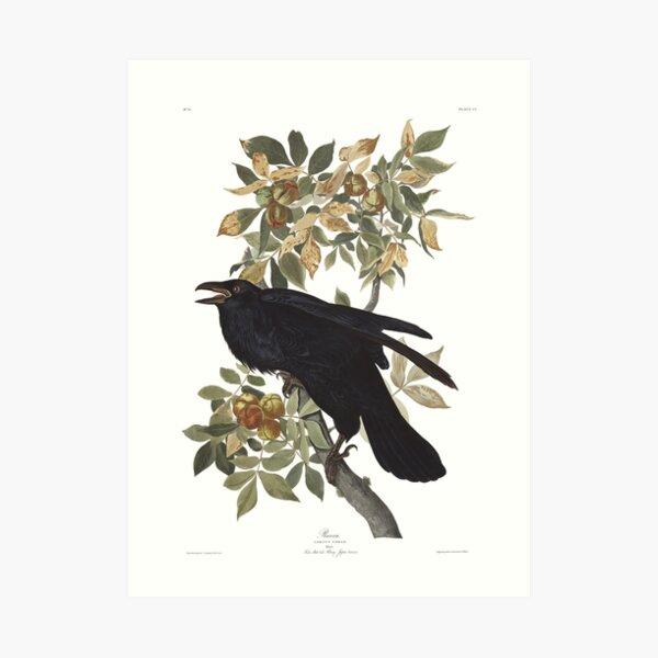 Raven - John James Audubon Art Print