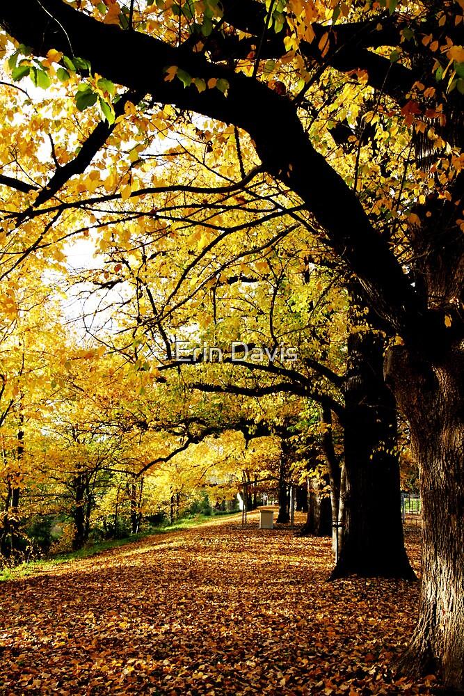 Autumn Enchantment No. 3 ... by Erin Davis