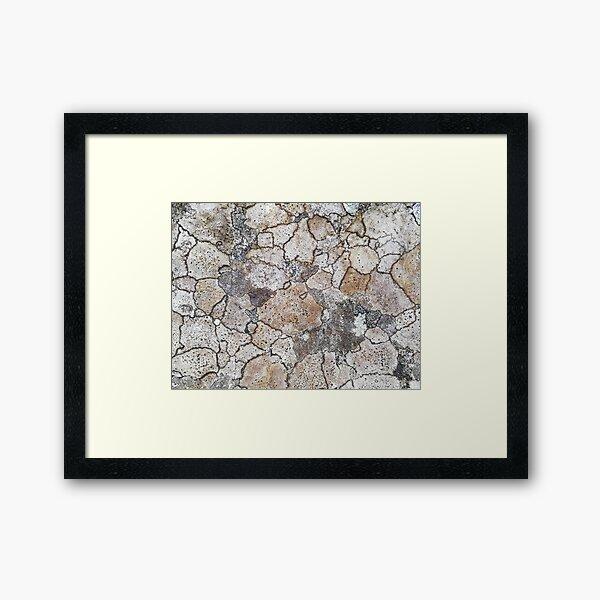 lichen patchwork Framed Art Print