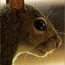 Portrait of a Mississippi Gray Squirrel/Natural by Terri Chandler