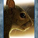 Portrait of a Mississippi Gray Squirrel /Blue Back by Terri Chandler