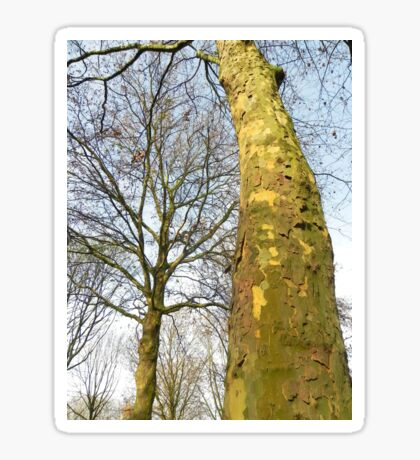 Two Plane trees  Sticker
