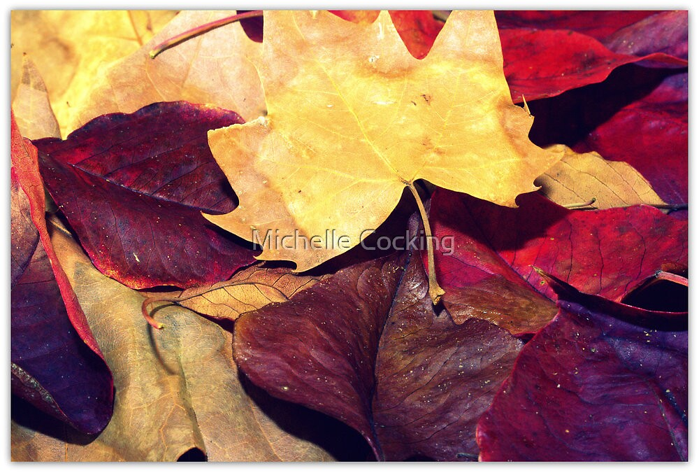 Autumn Colour by Michelle Cocking