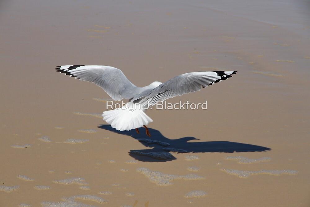 Landing by aussiebushstick