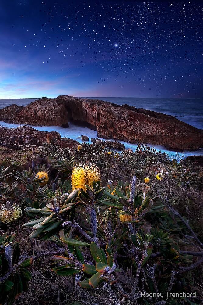 Blue Moon Light by Rodney Trenchard