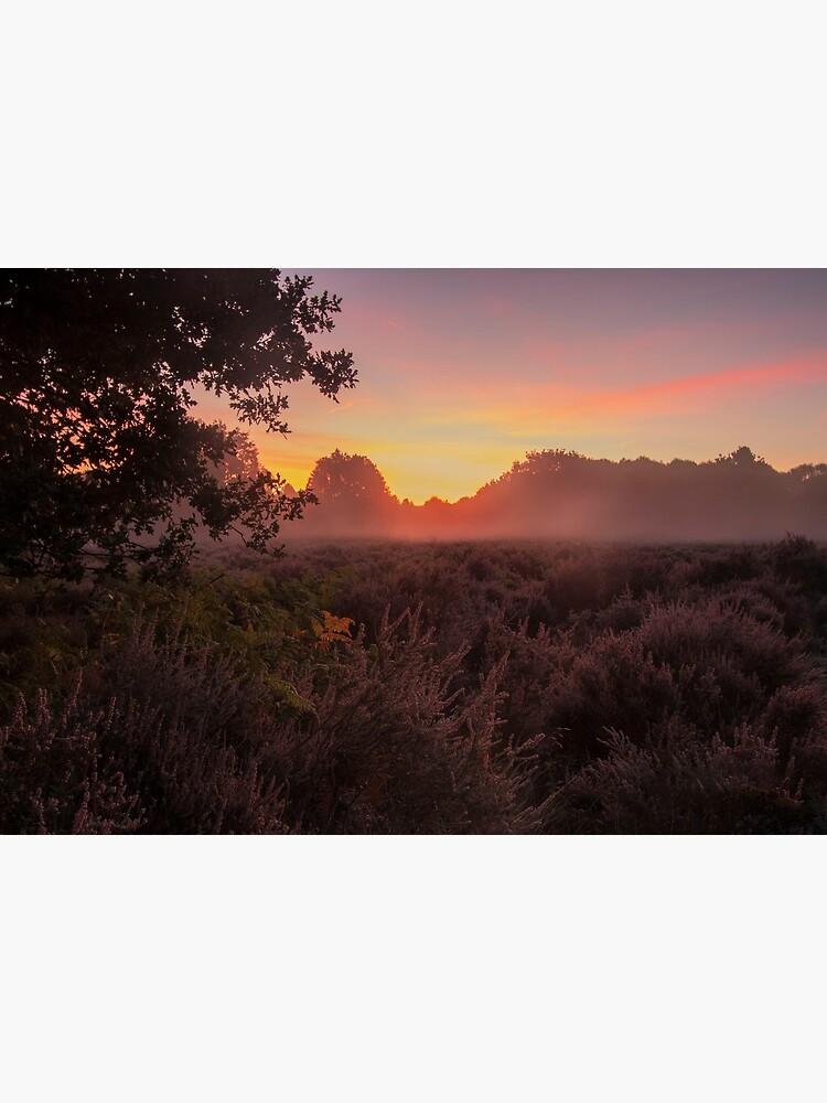 Budby Sunrise by DawnsArt92