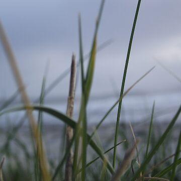 Grassy by gmxs