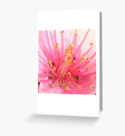 Pink Peach Pollen Macro Abstract Greeting Card