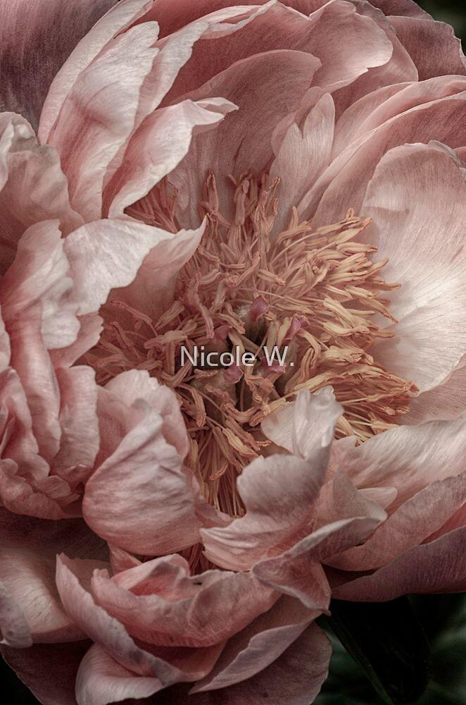 Pink Piony by Nicole W.