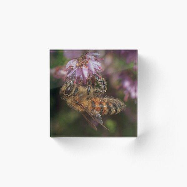 Honey Bee on Heather Acrylic Block