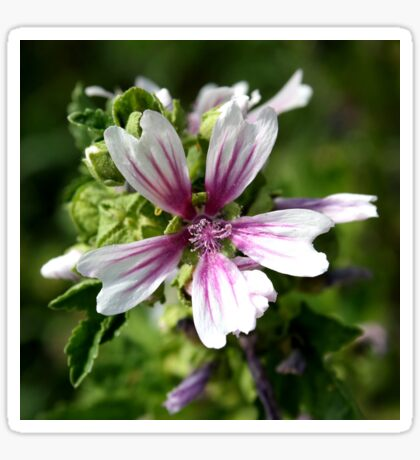Zebra Mallow Flower Sticker