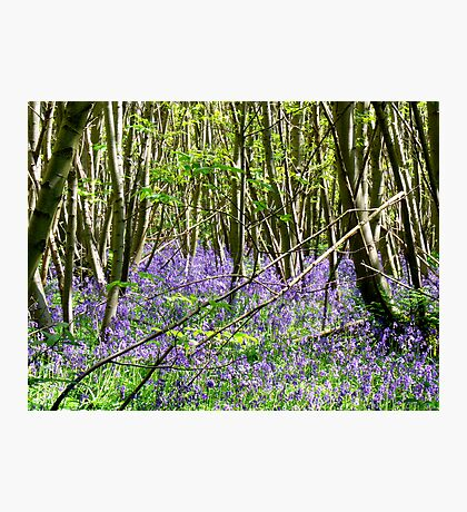 Woodland Carpet Photographic Print