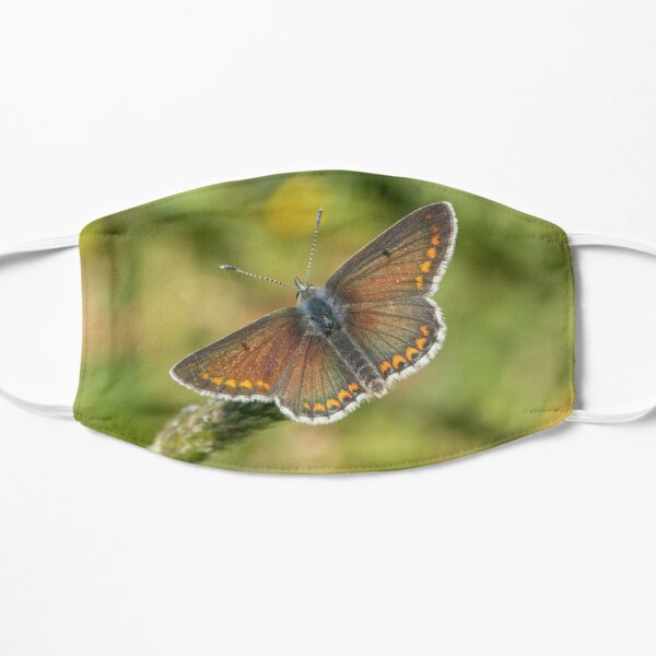 Male Brown Argus Mask