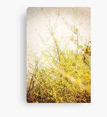 : Yellow Bokeh : Canvas Print