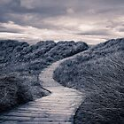 A path to where? Split Tone by Stevie B