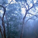 Get the Fog out of here by STEPHEN GEORGIOU PHOTOGRAPHY