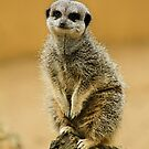 Simples by Mark Bunning