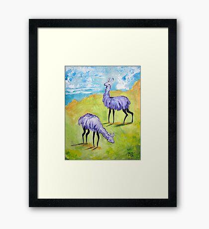 Angry Alpacas Framed Print