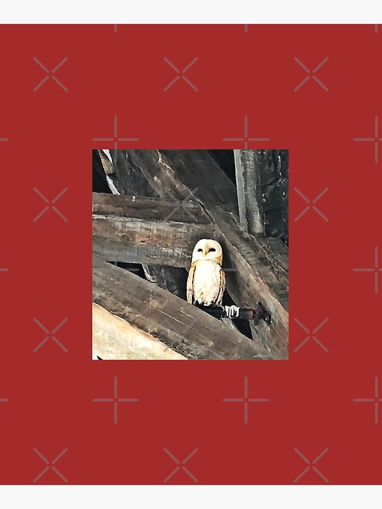 Owl by PicsByMi