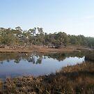 Wetlands by wickedmommicked
