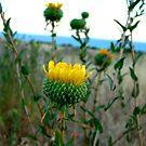 flower by Tim Horton