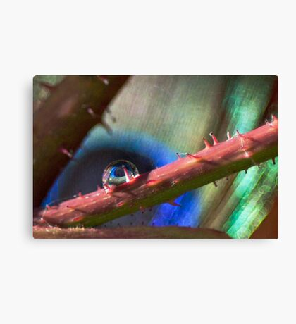 Nature's Eye Canvas Print
