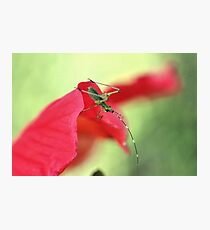 Green on Red Photographic Print