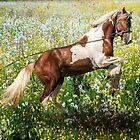 Gypsy Meadow by Brian Tarr