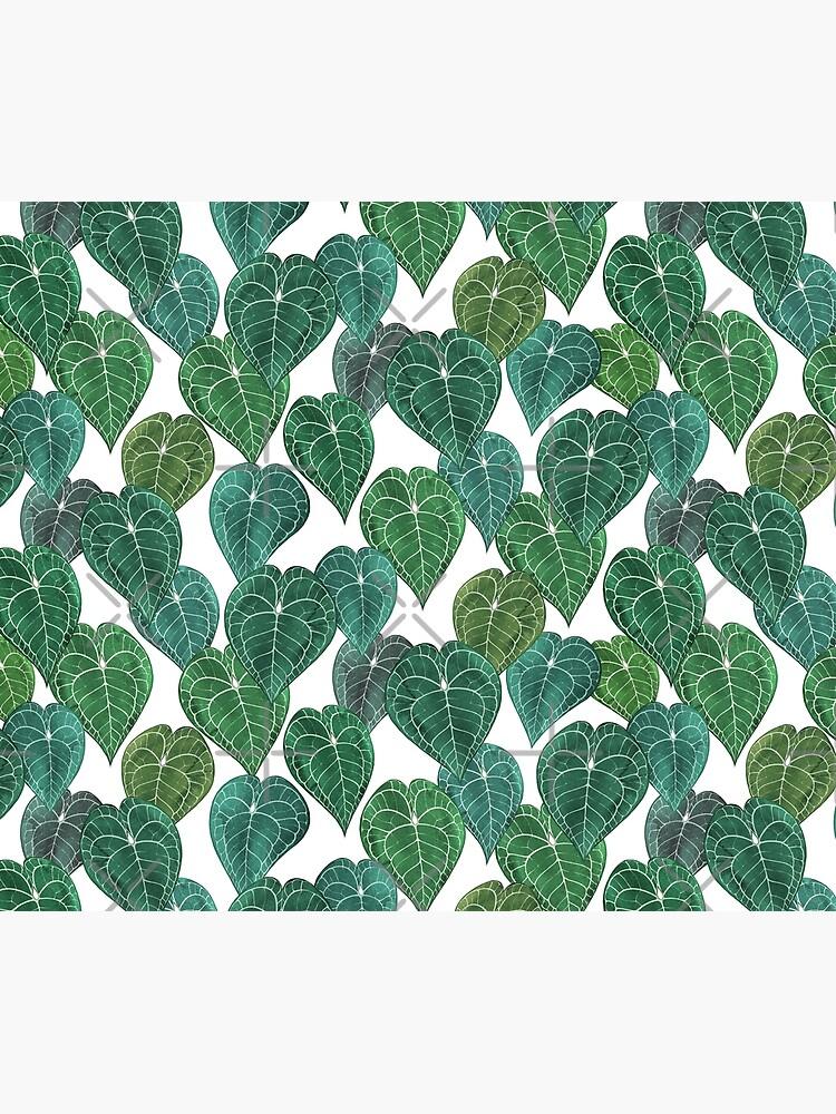 Anthurium clarinervium leaves by ikerpazstudio