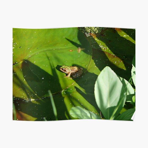 Frog and duckweed Poster