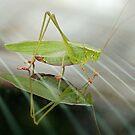 Grasshopper in Glass by Linda Long