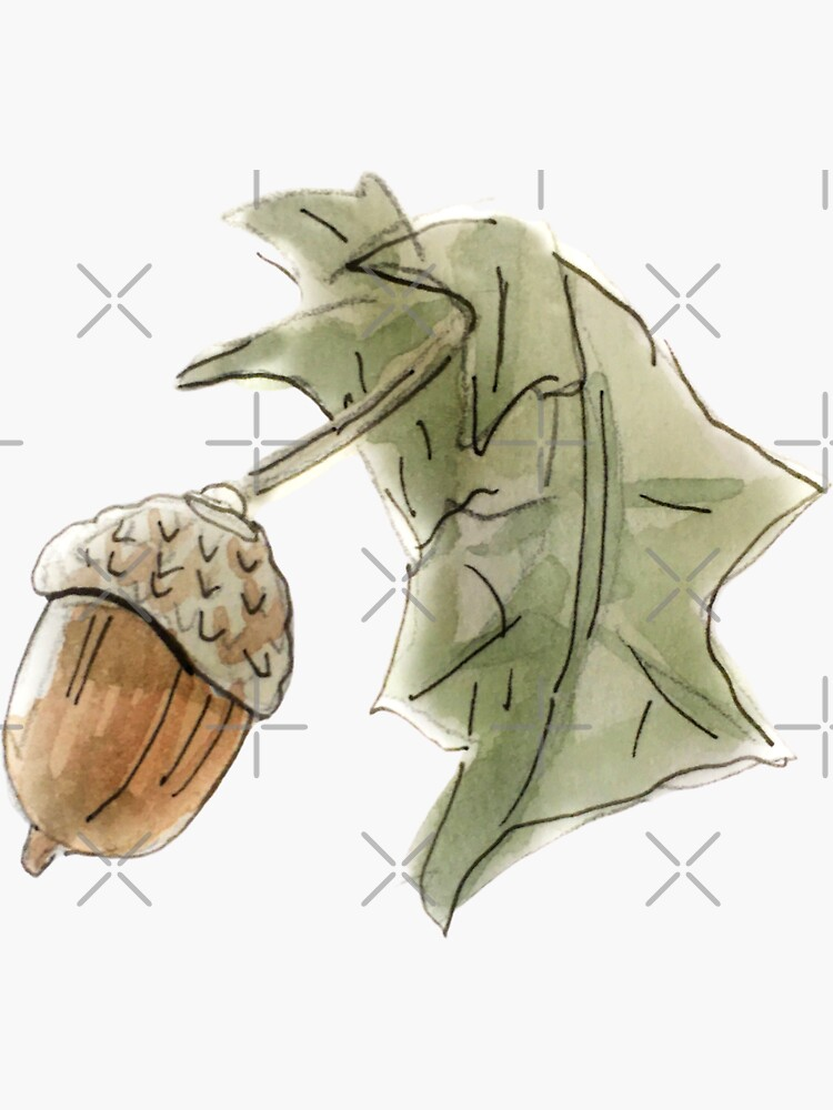 Woodsy Acorn and Lear Illustration in Watercolor  by WitchofWhimsy