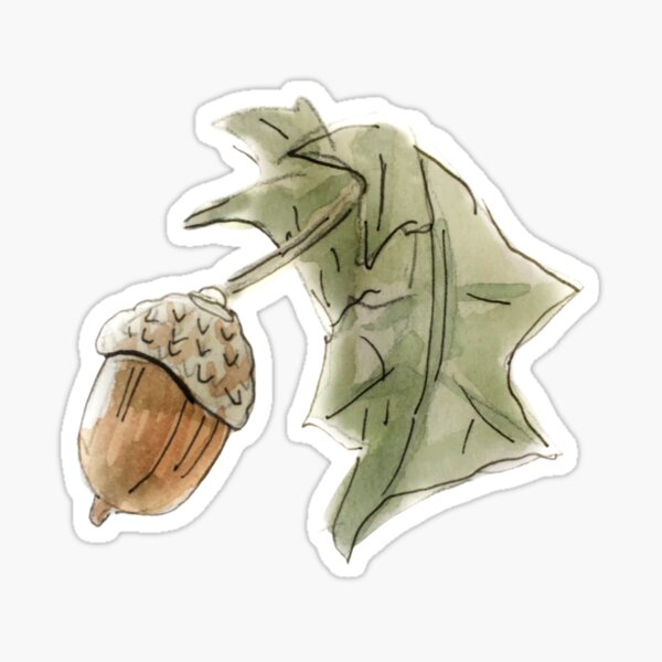 Woodsy Acorn and Lear Illustration in Watercolor  Sticker