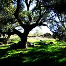 oak shade by Tim Horton