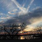 sunset by Tim Horton