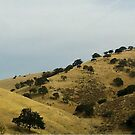 """""""California's Rolling Hills"""" by waddleudo"""