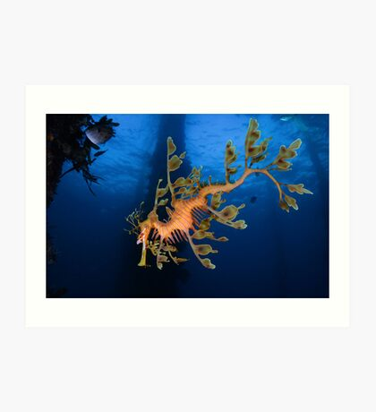 Phycodurus eques Art Print