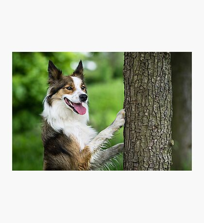 The Dog and the Tree Photographic Print
