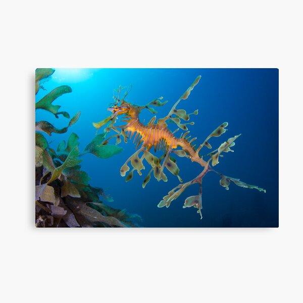 Kelp Creature Canvas Print