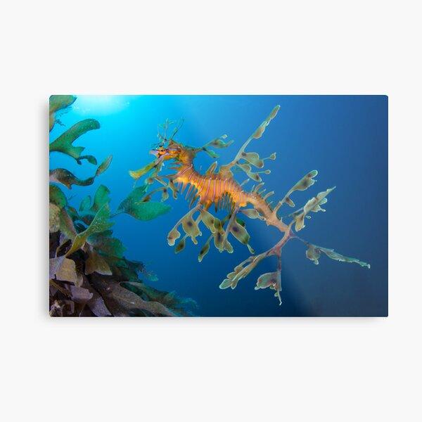 Kelp Creature Metal Print