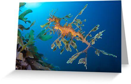 Kelp Creature by MattTworkowski