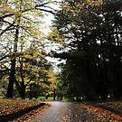 A Beautiful Path by Niamh Scally