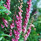 Towers of Pink Bells by Wolf Read