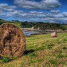 Hay Barrels in a Field by jcjc22