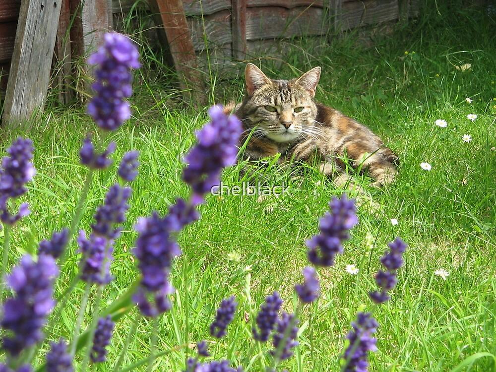Mia in the lavender by chelblack